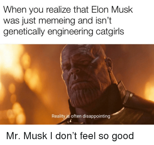 Good, Engineering, and Reality: When you realize that Elon Musk  was just memeing and isn't  genetically engineering catgirl:s  Reality is often disappointing Mr. Musk I don't feel so good