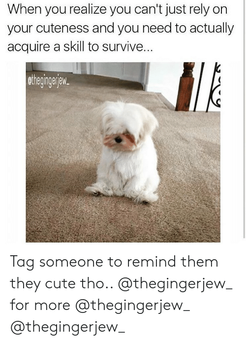 Cute, Memes, and Tag Someone: When you realize you can't just rely on  your cuteness and you need to actually  acquire a skill to survive  othegingerjew. Tag someone to remind them they cute tho.. @thegingerjew_ for more @thegingerjew_ @thegingerjew_