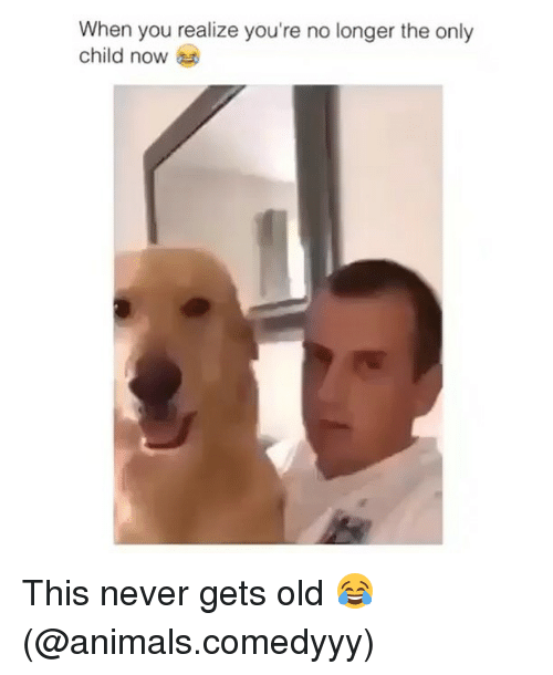 Animals, Funny, and Old: When you realize you're no longer the only  child now This never gets old 😂 (@animals.comedyyy)