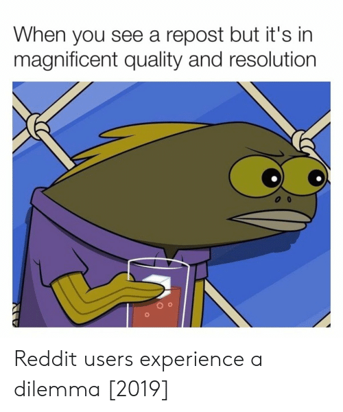 Reddit, Magnificent, and Experience: When you see a repost but it's in  magnificent quality and resolution Reddit users experience a dilemma [2019]
