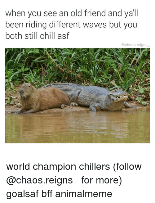 Chill, Memes, and Waves: when you see an old friend and ya'll  been riding different waves but you  both still chill asf  @chaos.reigns world champion chillers (follow @chaos.reigns_ for more) goalsaf bff animalmeme
