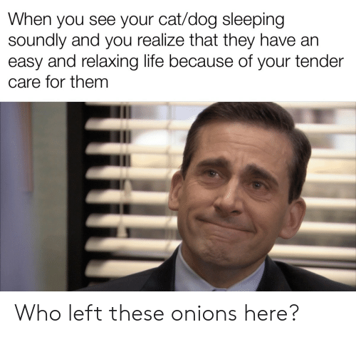 Life, Sleeping, and Dog: When you see your cat/dog sleeping  soundly and you realize that they have arn  easy and relaxing life because of your tender  care for them Who left these onions here?