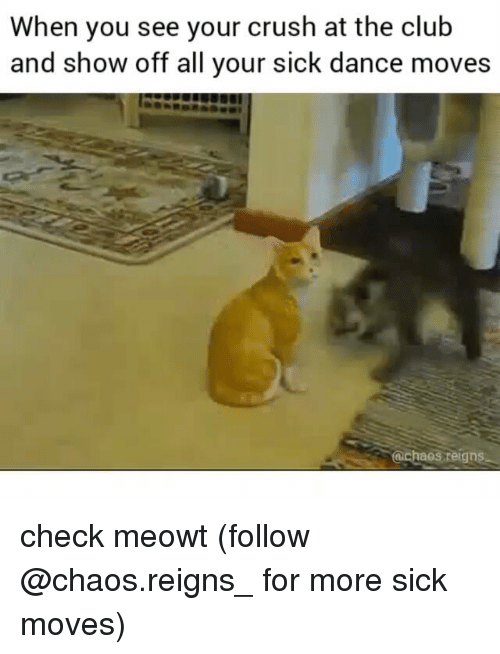 Club, Crush, and Memes: When you see your crush at the club  and show off all your sick dance moves  @cheos,reigns check meowt (follow @chaos.reigns_ for more sick moves)
