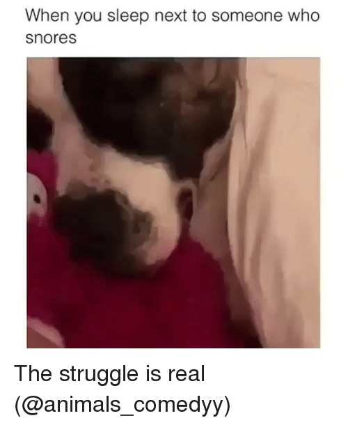 Animals, Funny, and Struggle: When you sleep next to someone who  snores The struggle is real (@animals_comedyy)