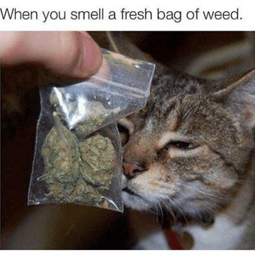 Fresh, Memes, and Smell: When you smell a fresh bag of weed