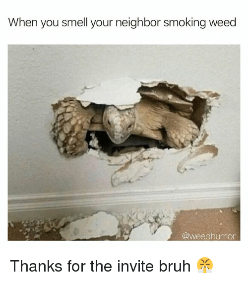 Bruh, Smell, and Smoking: When you smell your neighbor smoking weed  @weedhumor Thanks for the invite bruh 😤