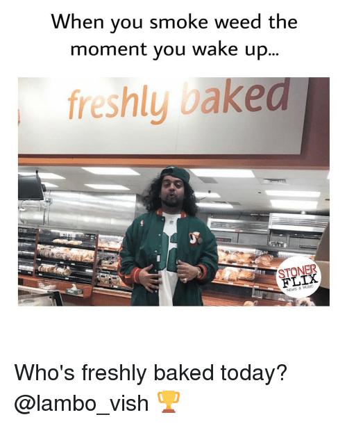 Baked, Fresh, and Memes: When you smoke weed the  moment you wake up  freshly bake  STONER  NEWS & MUSIC Who's freshly baked today? @lambo_vish 🏆