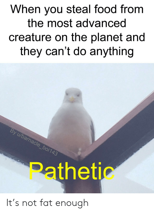 Food, Fat, and Creature: When you steal food from  the most advanced  creature on the planet and  they can't do anything  By u/barnacle_boi143  Pathetic It's not fat enough