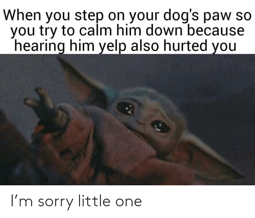 Dogs, Sorry, and Yelp: When you step on your dog's paw so  you try to calm him down because  hearing him yelp also hurted you I'm sorry little one