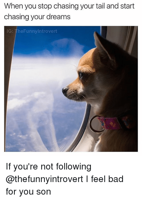 Bad, Introvert, and Memes: When you stop chasing your tail and start  chasing your dreams  IG: TheFunny Introvert If you're not following @thefunnyintrovert I feel bad for you son