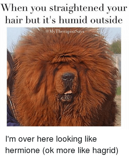 when you straightened your hair but its humid outside mytherapistsays 22660837 ✅ 25 best memes about humid humid memes