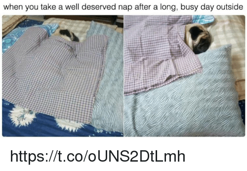 Memes, 🤖, and Day: when you take a well deserved nap after a long, busy day outside https://t.co/oUNS2DtLmh