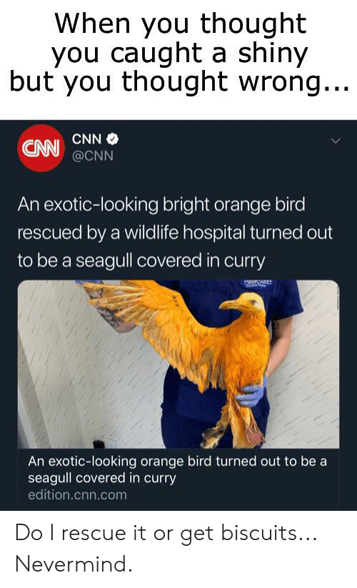 cnn.com, Hospital, and Orange: When you thought  you caught a shiny  but you thought wrong...  CNN  CNN @CNN  An exotic-looking bright orange bird  rescued by a wildlife hospital turned out  to be a seagull covered in curry  An exotic-looking orange bird turned out to be a  seagull covered in curry  edition.cnn.com Do I rescue it or get biscuits... Nevermind.
