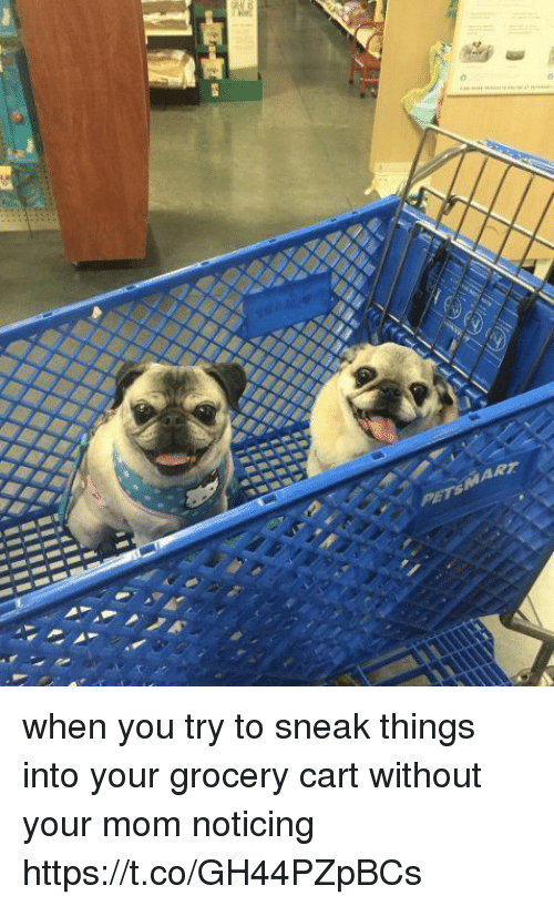 Mom Sneaks In Sons Bedroom: When You Try To Sneak Things Into Your Grocery Cart