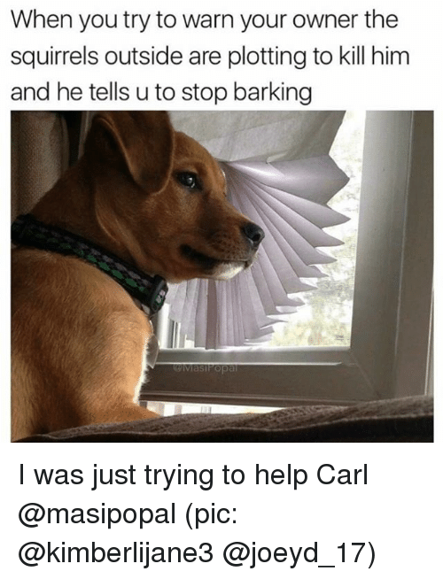 Funny, Help, and Girl Memes: When you try to warn your owner the  squirrels outside are plotting to kill him  and he tells u to stop barking I was just trying to help Carl @masipopal (pic: @kimberlijane3 @joeyd_17)