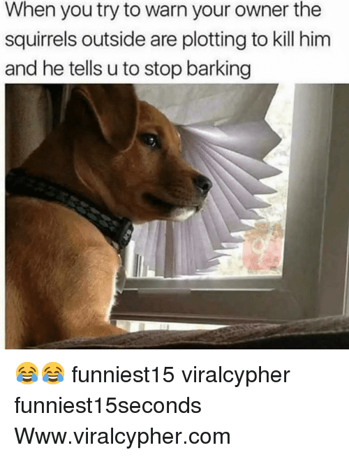 Funny, Com, and Him: When you try to warn your owner the  squirrels outside are plotting to kill him  and he tells u to stop barking 😂😂 funniest15 viralcypher funniest15seconds Www.viralcypher.com