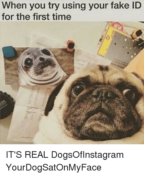 On It's First me The Using You Real Dogs Me When For Id Try Fake Your Time Meme Dogsofinstagram Yourdogsatonmyface