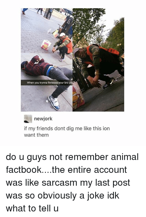 Friends, Tumblr, and Animal: When you trynna finnesse your bro  newjork  if my friends dont dig me like this ion  want them do u guys not remember animal factbook....the entire account was like sarcasm my last post was so obviously a joke idk what to tell u