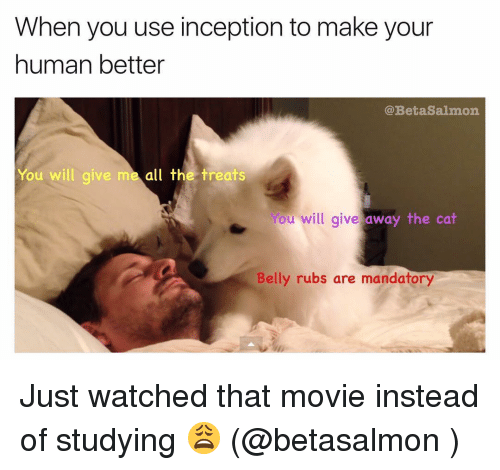 Cats, Inception, and Memes: When you use inception to make your  human better  @Beta Salmon  You will give  me all the treats  You will give away the cat  Belly rubs are mandatory Just watched that movie instead of studying 😩 (@betasalmon )