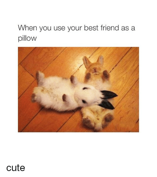 when you use your best friend as a pillow cute 256716 ✅ 25 best memes about cute cute memes