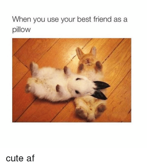 when you use your best friend as a pillow cute 5798813 ✅ 25 best memes about best friend best friend memes