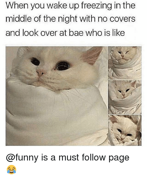 Bae, Funny, and Covers: When you wake up freezing in the  middle of the night with no covers  and look over at bae who is like @funny is a must follow page 😂