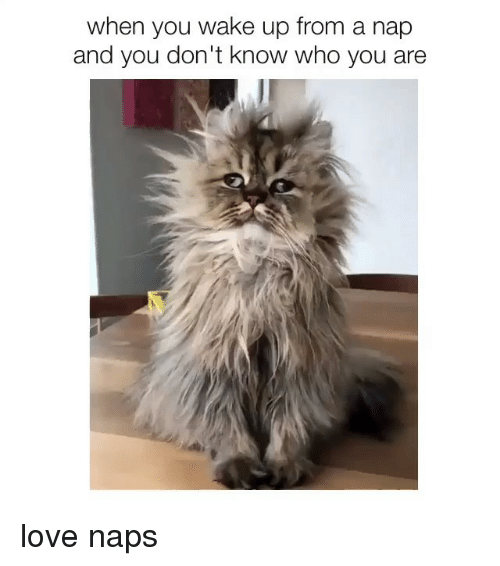 Love, Girl Memes, and Who: when you wake up from a nap  and you don't know who you are love naps