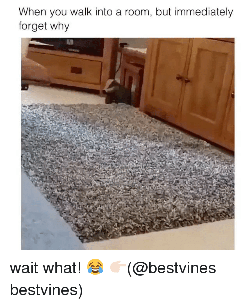 Memes, 🤖, and Why: When you walk into a room, but immediately  forget why wait what! 😂 👉🏻(@bestvines bestvines)