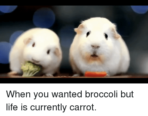 Life, Wanted, and Broccoli