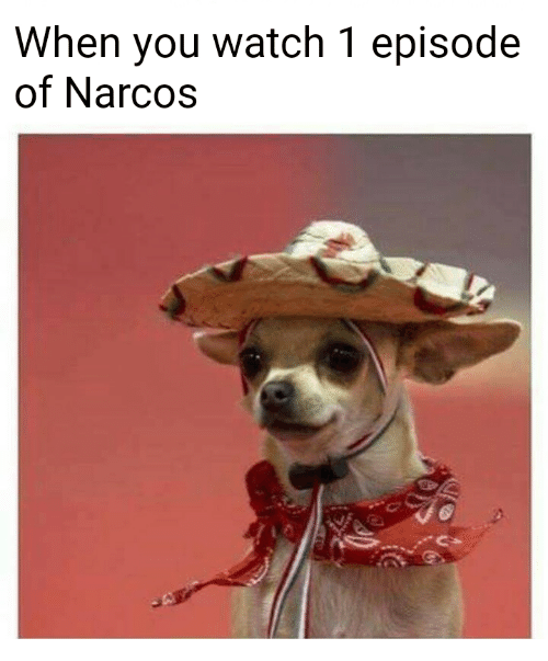 When You Watch 1 Episode Of Narcos Narcos Meme On Sizzle