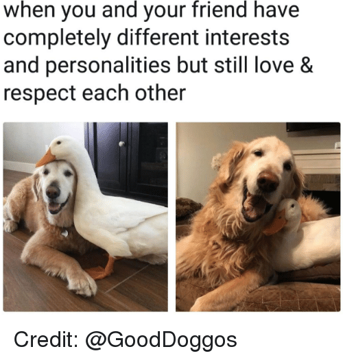 Love, Respect, and Friend: when  you your  and  friend  have  completely different interests  and personalities but still love &  respect each other Credit: @GoodDoggos