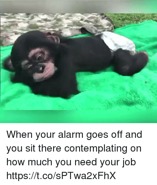 Alarm, Girl Memes, and How: When your alarm goes off and you sit there contemplating on how much you need your job https://t.co/sPTwa2xFhX