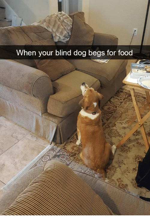 when your blind dog begs for food 28077981 ✅ 25 best memes about dog types dog types memes