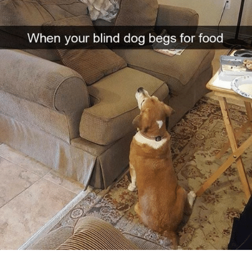 Food, Dog, and For: When your blind dog begs for food