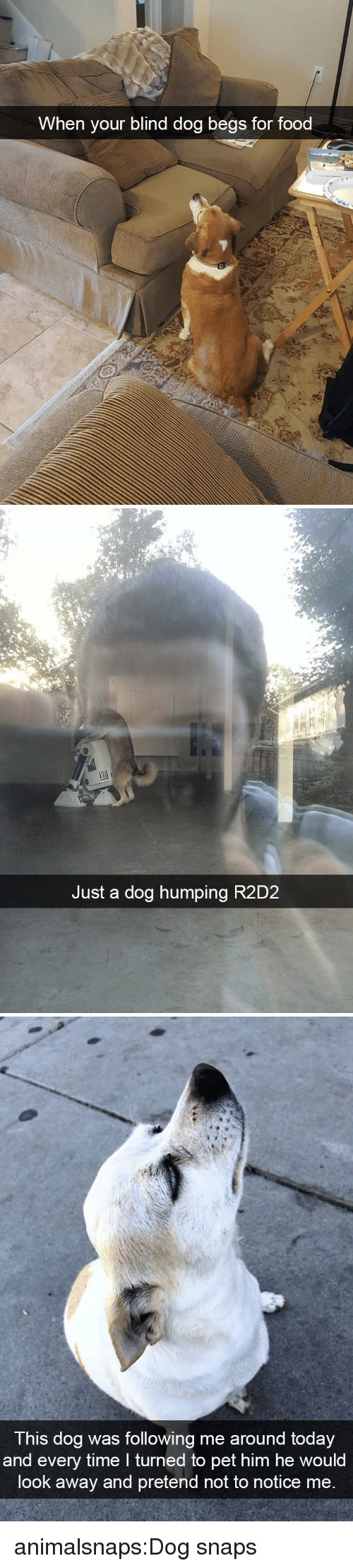 Food, Target, and Tumblr: When your blind dog begs for food   Just a dog humping R2D2   T his dog was following me around today  and every time I turned to pet him he would  look away and pretend not to notice me animalsnaps:Dog snaps
