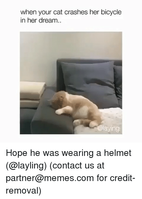 Memes, Bicycle, and Hope: when your cat crashes her bicycle  in her dream..  @laying Hope he was wearing a helmet (@layling) (contact us at partner@memes.com for credit-removal)