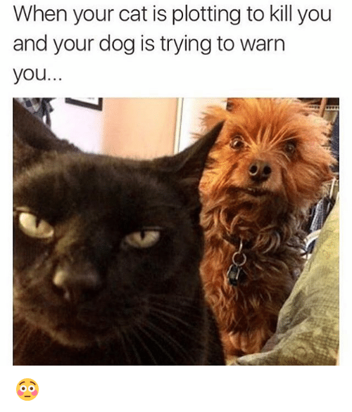 when your cat is plotting to kill you and your 3172677 when your cat is plotting to kill you and your dog is trying to warn