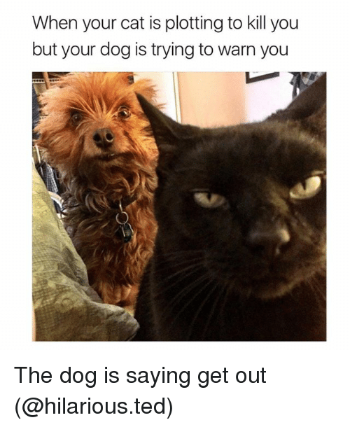 Funny, Ted, and Hilarious: When your cat is plotting to kill you  but your dog is trying to warn you The dog is saying get out (@hilarious.ted)