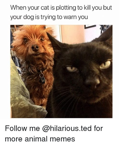 Funny, Memes, and Ted: When your cat is plotting to kill you but  your dog is trying to warn you Follow me @hilarious.ted for more animal memes