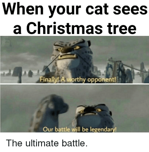 Christmas, Christmas Tree, and Tree: When your cat sees  a Christmas tree  nailylL A  Op  Our battle will be legendary The ultimate battle.