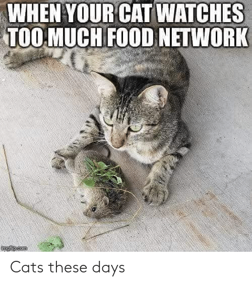 Cats, Food, and Food Network: WHEN YOUR CAT WATCHES  TOO MUCH FOOD NETWORK Cats these days