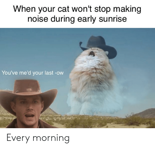When Your Cat Won't Stop Making Noise During Early Sunrise