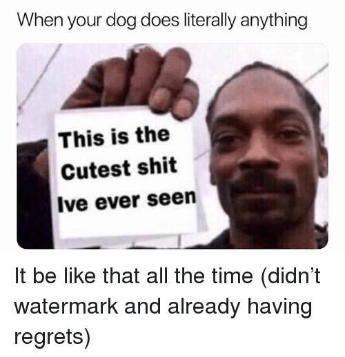 Be Like, Memes, and Shit: When your dog does literally anything  This is the  Cutest shit  Ive ever seen It be like that all the time (didn't watermark and already having regrets)