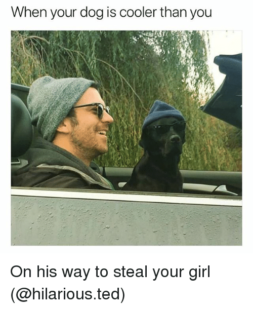 Funny, Ted, and Girl: When your dog is cooler than you On his way to steal your girl (@hilarious.ted)