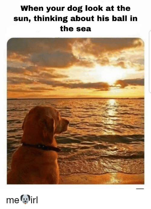 Irl, Sun, and Dog: When your dog look at the  sun, thinking about his ball in  the sea