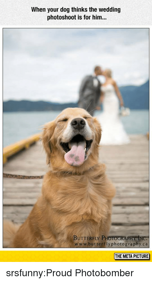 Tumblr, Blog, and Butterfly: When your dog thinks the wedding  photoshoot is for him...  BUTTERFLY PHOTOGRA  www.butterflyphotography.ca  THE META PICTURE srsfunny:Proud Photobomber