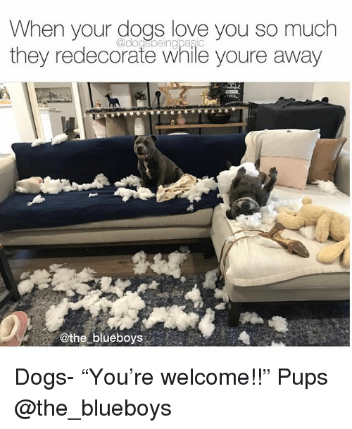 """Dogs, Love, and Memes: When your dogs love you so much  @dogsbeingbasic  they redecorate while youre away  @the blueboys Dogs- """"You're welcome!!"""" Pups @the_blueboys"""