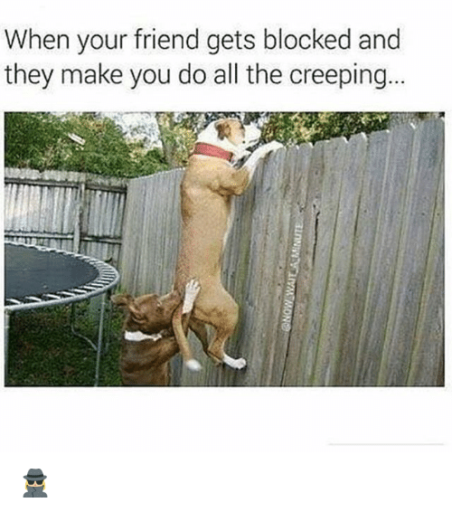 Memes, All The, and 🤖: When your friend gets blocked and  they make you do all the creeping. 🕵🏼♀️
