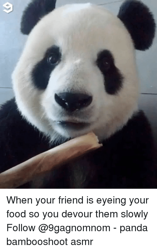 Food, Memes, and Panda: When your friend is eyeing your food so you devour them slowly Follow @9gagnomnom - panda bambooshoot asmr