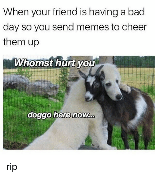 When Your Friend Is Having A Bad Day So You Send Memes To Cheer Them